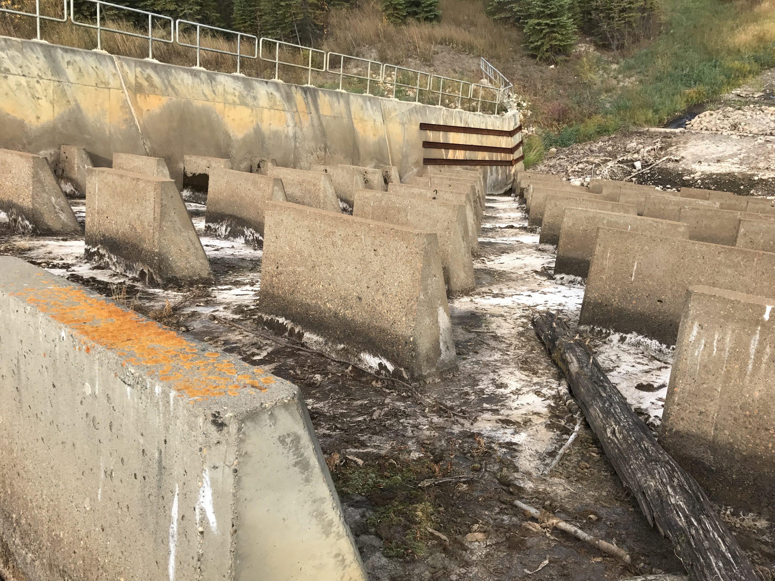 Dam Restoration.JPG